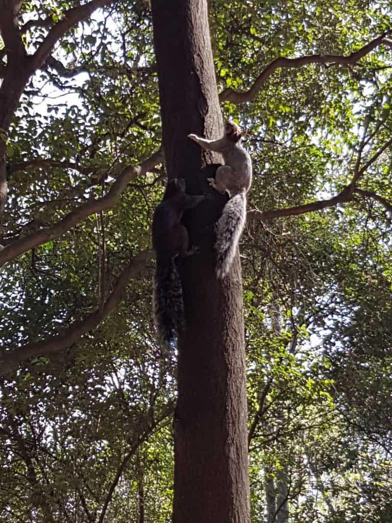 Squirrels in Chapultepec Park