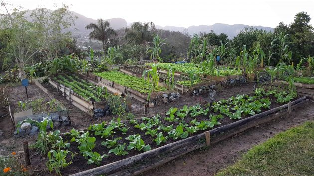 Farm in Vinales which cooks and serves all its own produce
