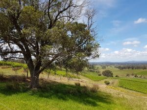 Looking out over the Hunter Valley