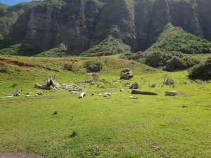 Field of bones from King Kong, Kualoa Ranch Oahu