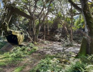 Kong: Skull Island crashed helicopter set on Jungle Jeep expedition, Kulaoa Ranch Oahu