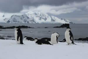Penguins in Antarctica by Teresa from Type A Trekker