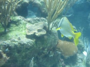 Underwater life Sea Trekking in Mexico by Breanna from Messy Buns and Mom Jeans