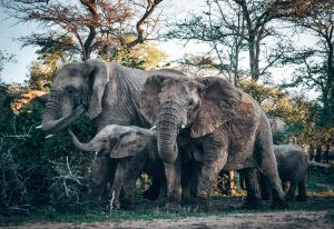 Family of Elephants in South Africa by James from Travel Scribes