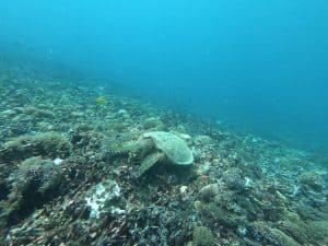 Snorkeling with Turtles in Indonesia by Campbell from Highlands 2 Hammocks