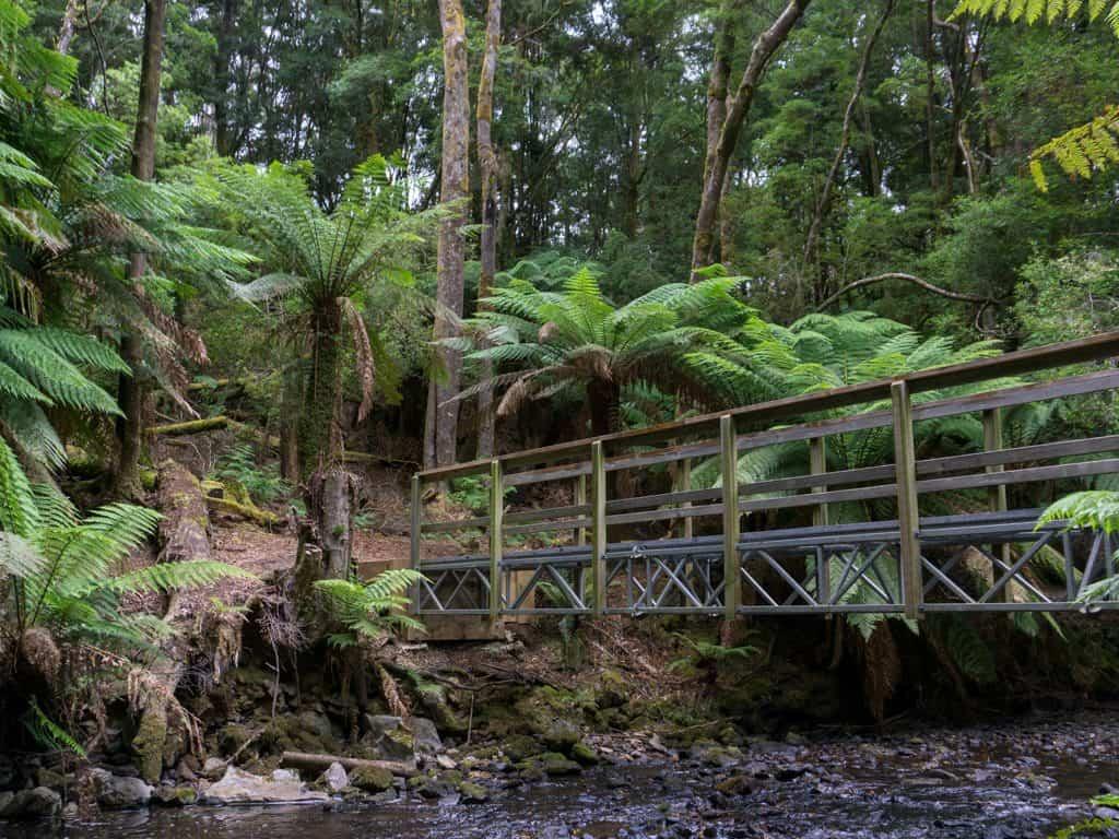 Tarkine Julius River Walk on the Tarkine Road, Tasmania. Courtesy of Happiest Outdoors