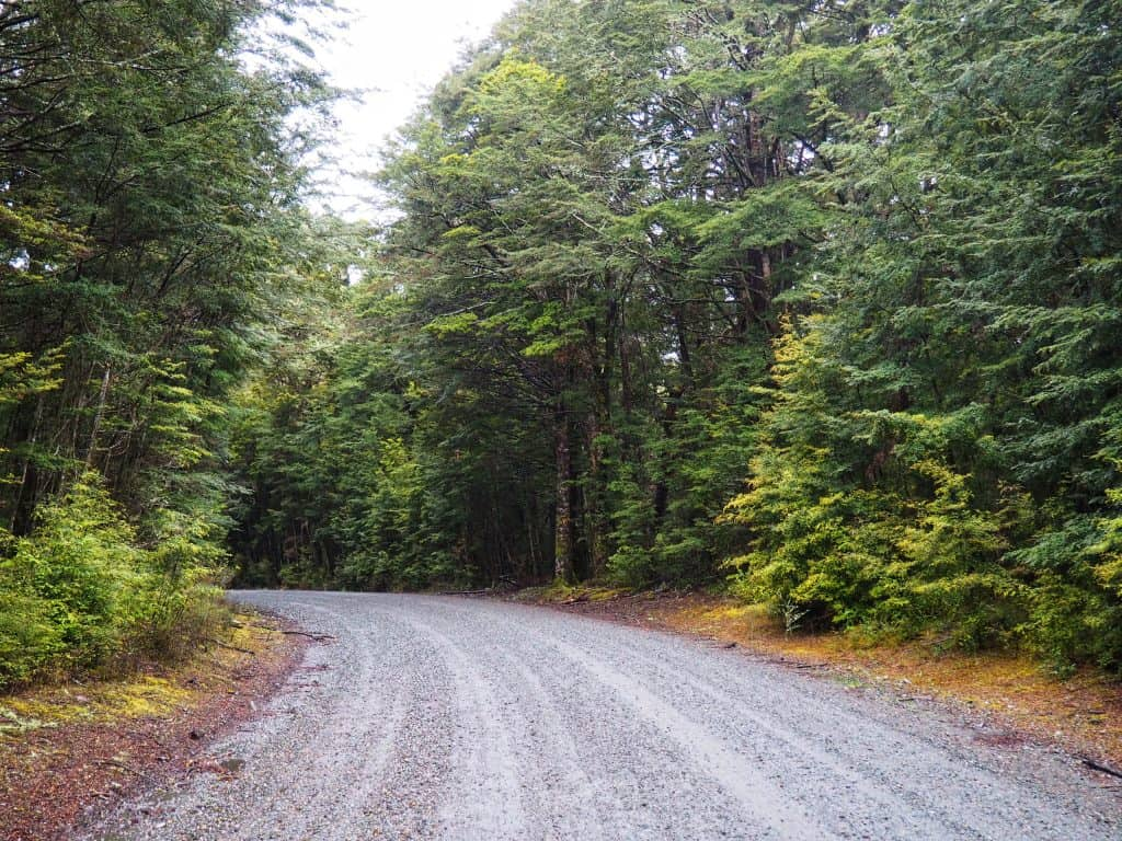 Beech Forest on Takaro Road