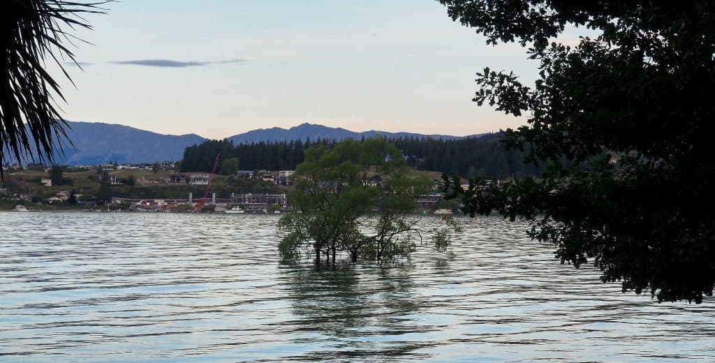 Image of the Wanaka tree in flooded lake with town of Wanaka in the background