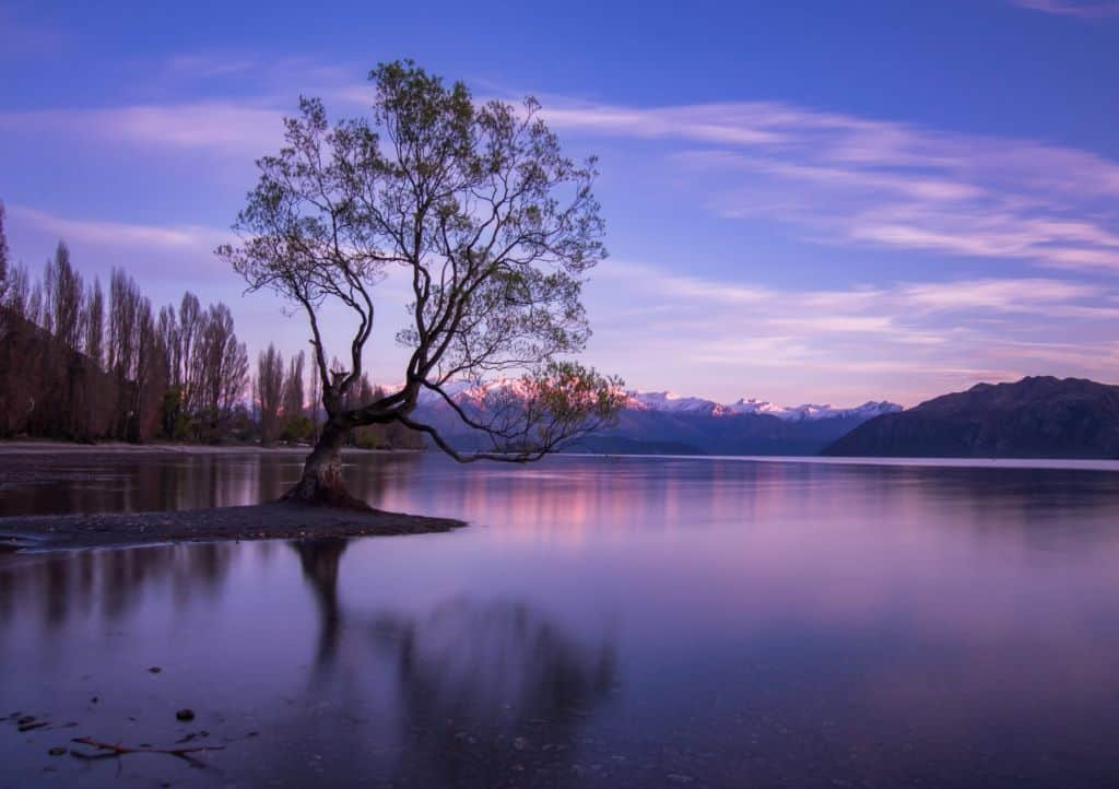 Wanaka Tree at Sunrise courtesy of Czech The World