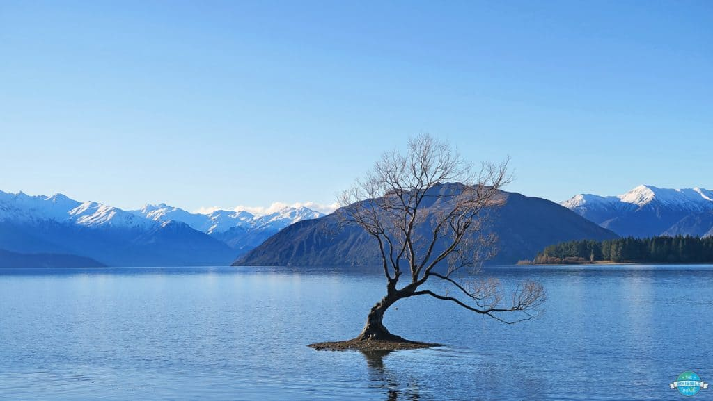 Image of the Wanaka Tree at high tide with mountain background