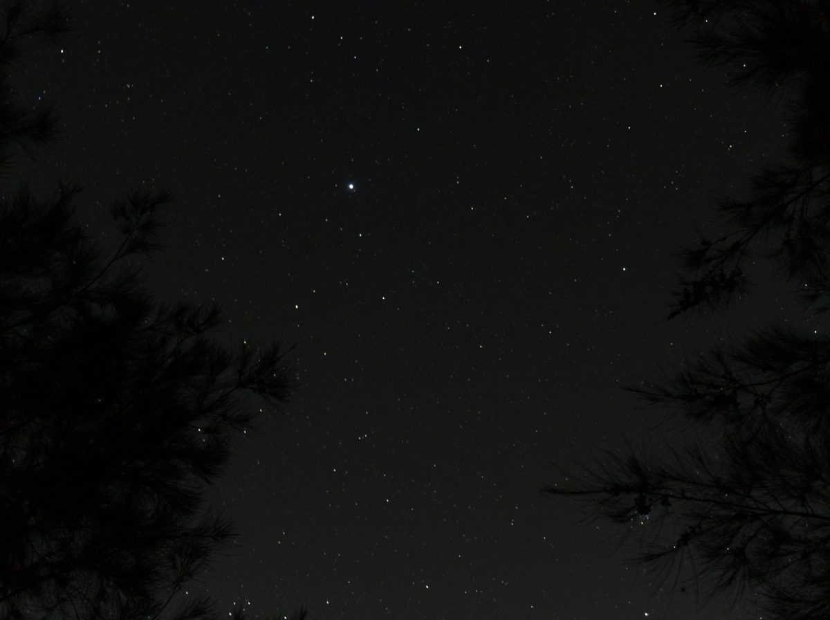 Photo of night sky bordered by two trees taken at Yarramundi in the Hawkesbury region of Australia