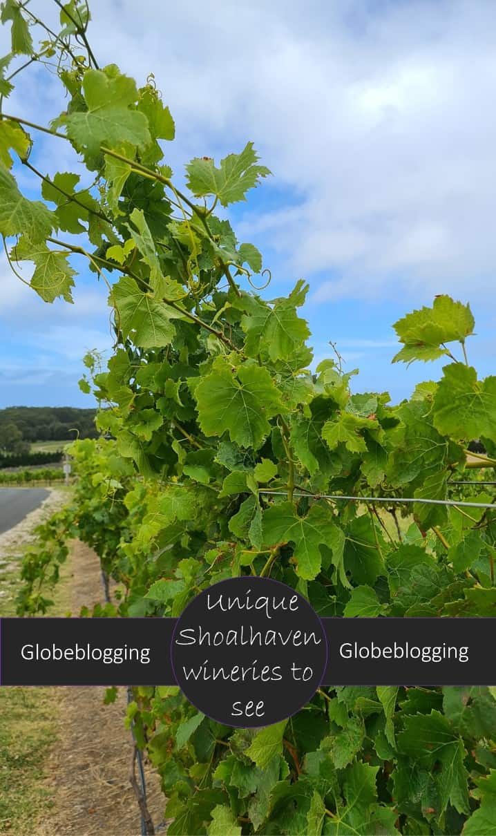 The Shoalhaven coast produces wines which have received over 1000 Australian and international awards. Don't miss these unique Shoalhaven wineries.