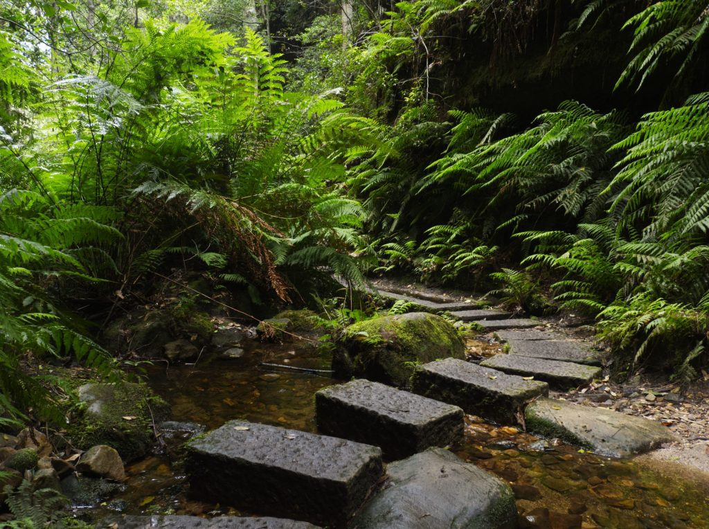 Stone steps across Greaves Creek in the Grand Canyon Blue Mountains