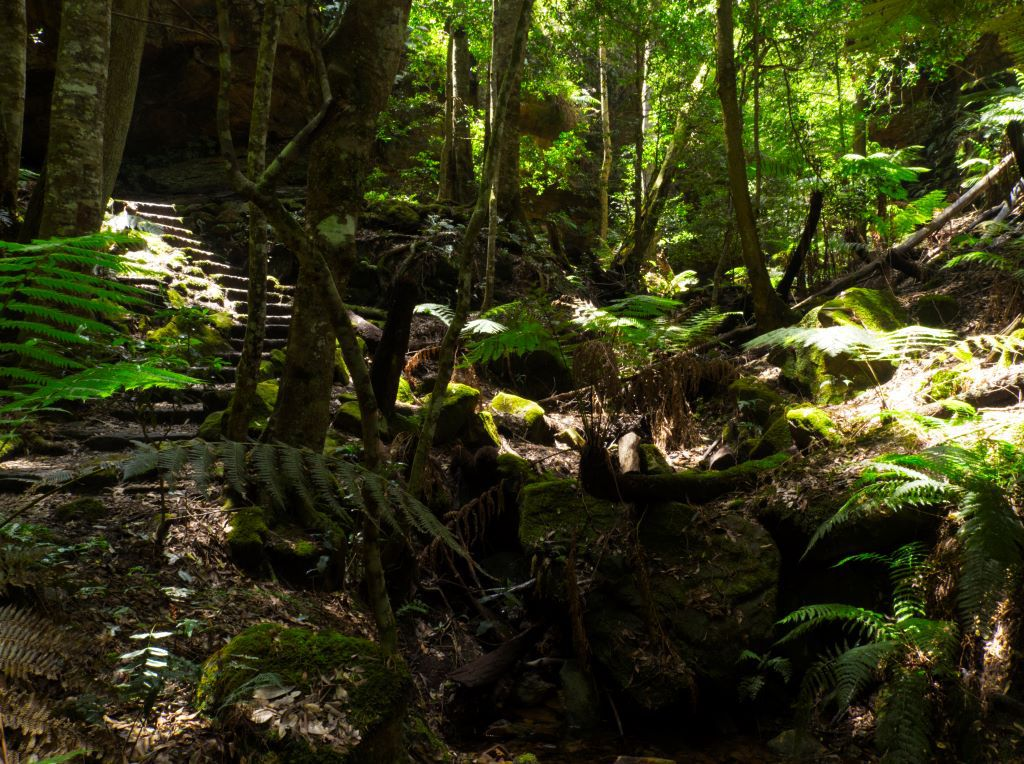 Stone stairway through the Rainforest of the Grand Canyon Blue Mountains