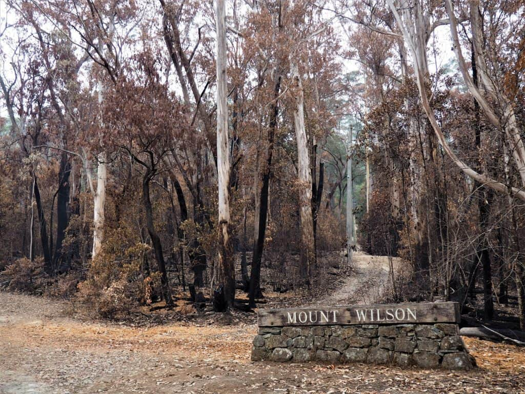 Image showing the stone monument marking the town of Mount Wilson, with burnt trees surrounding it