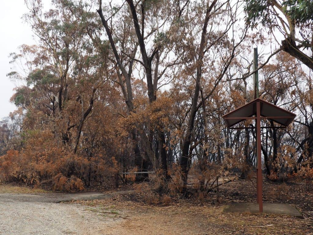 Burned bushland at a rest stop on Bells Line of Road near Bilpin, January 11 2020