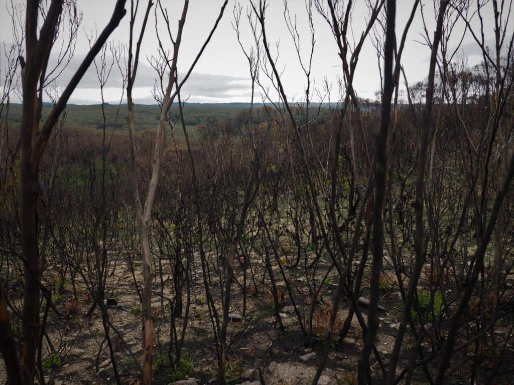 Bushland off Mount Hay Road in February 2020 after the Grose Valley fire