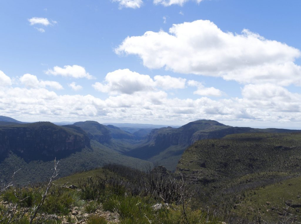 View from Lockleys Pylon in Blackheath showing some of the recovery from the 2019 Grose Valley fire