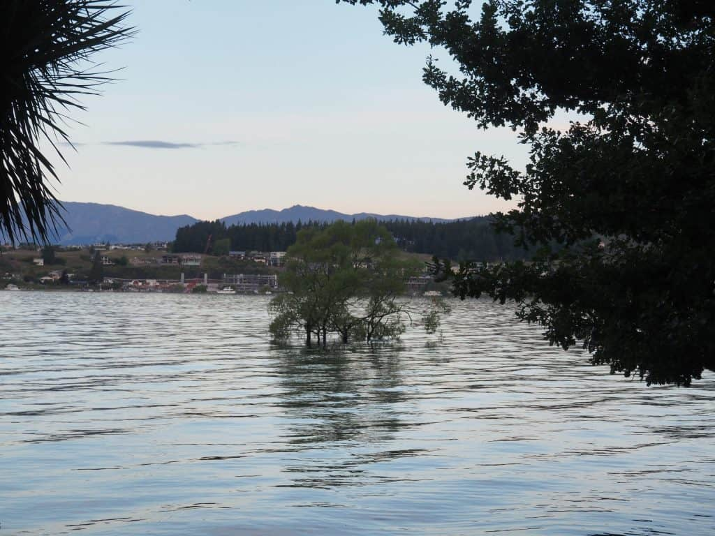 The Wanaka tree far more submerged in water than normal